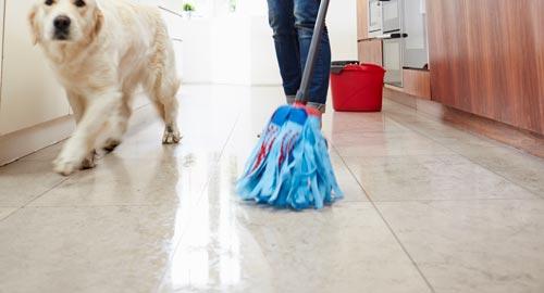 tekniker för att få bort fläckar från husdjur